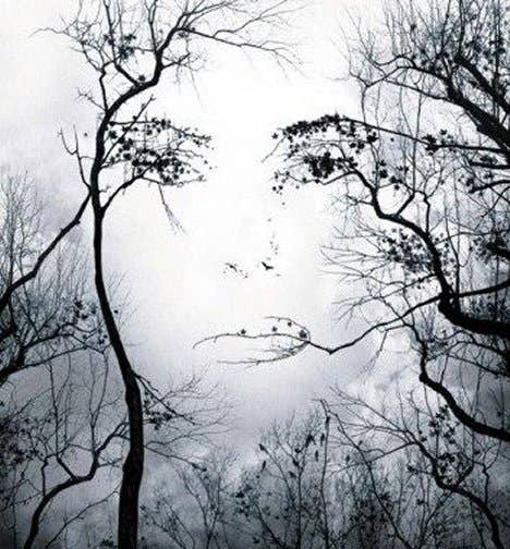 face-in-trees-illusion.jpg