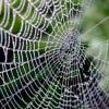 spider10's Profile Picture