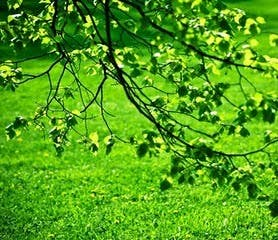 green nature images.jpg (21).jpg
